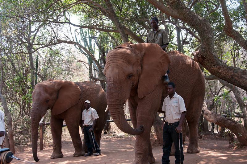 Elephants at the Hartbeespoort Dam Elephant Sanctuary, South Africa