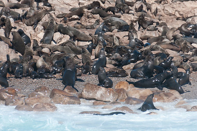 Geyser Rock and Cape Fur Seals