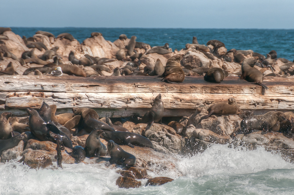 Seal rock, off the coast of Hermanus, South Africa