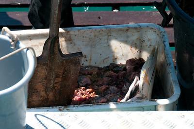 Fish bait in Hermanus, South Africa