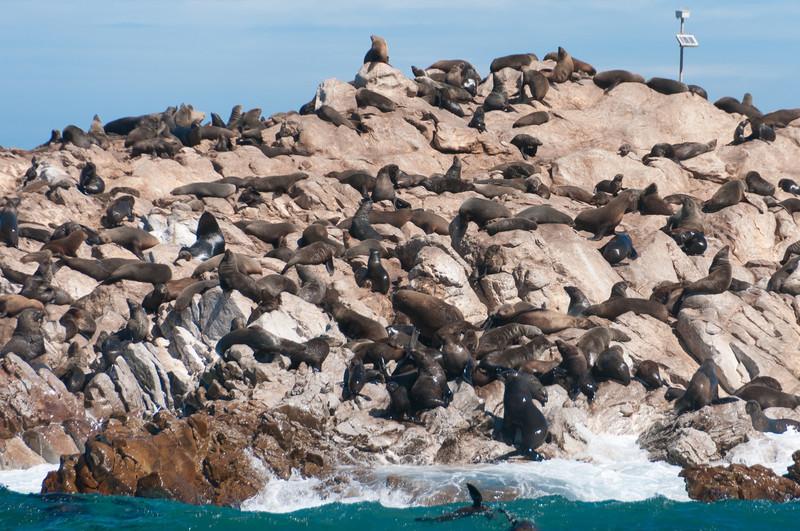 Seal rock in Hermanus, South Africa