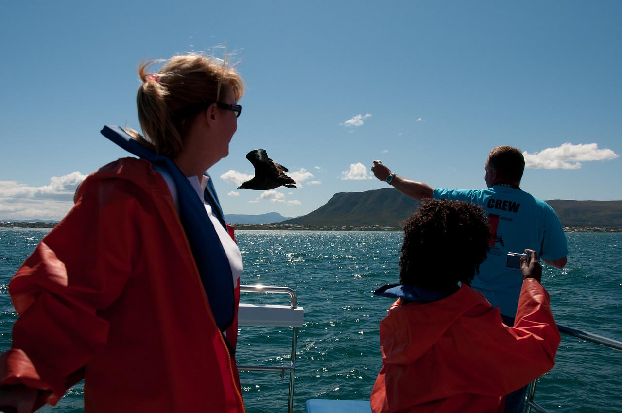 Shark diving in Hermanus, South Africa