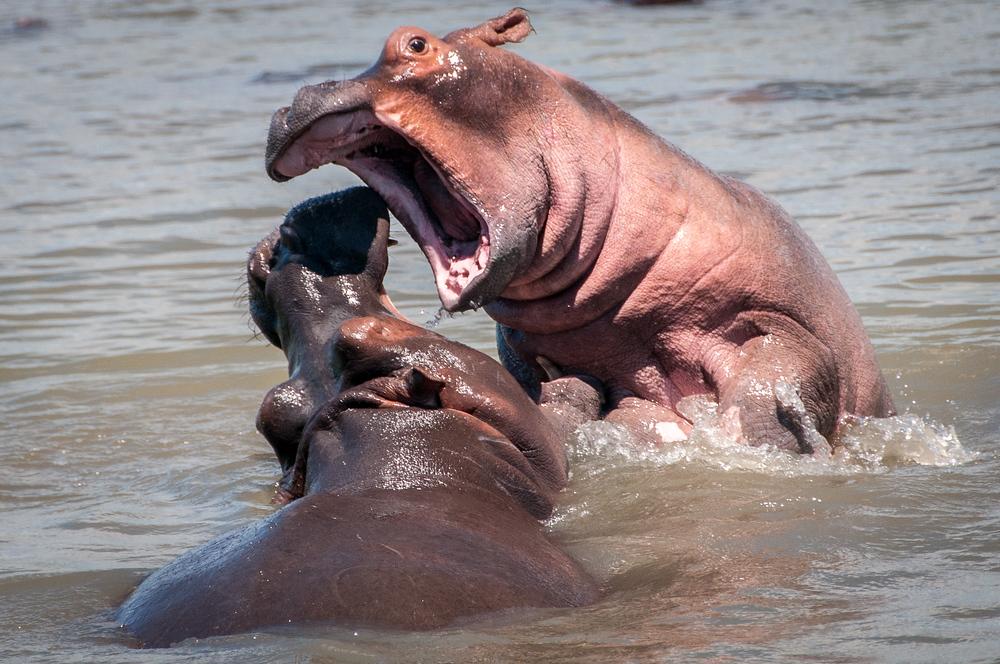 UNESCO World Heritage Site #265:  iSimangaliso Wetland Park