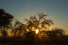 Sunrise, Kgalagadi Transfrontier Park, South Africa.  August 2017