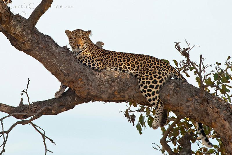 Kruger 2013