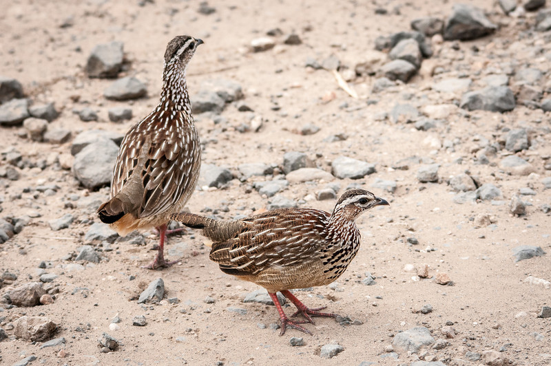 Birds at Kruger National Park