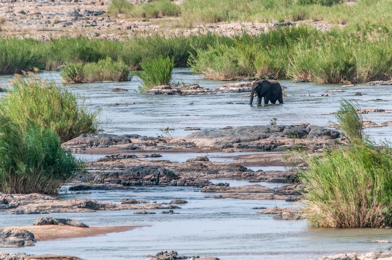 Elephant in Kruger National Park