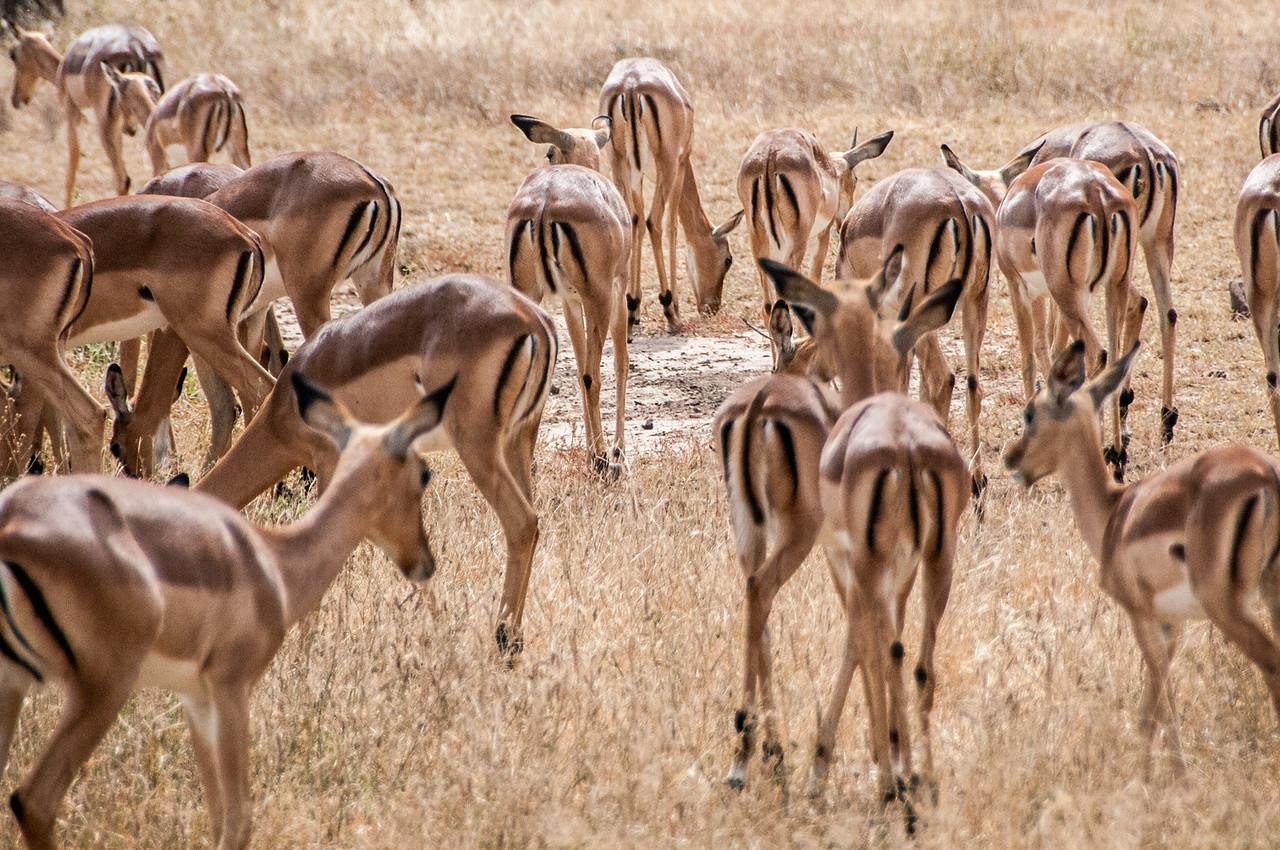 A herd of antelopes in Kruger National Park