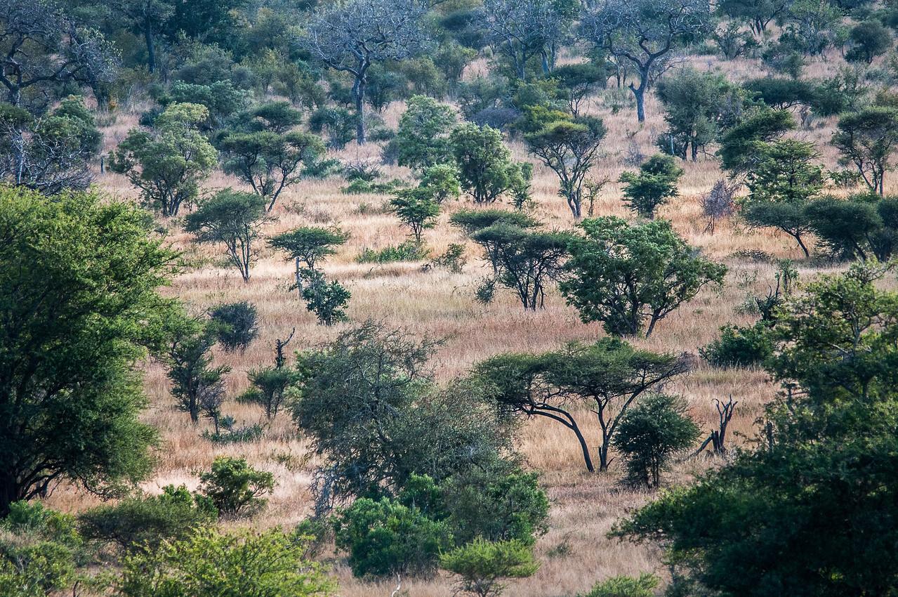 Landscape at Kruger National Park