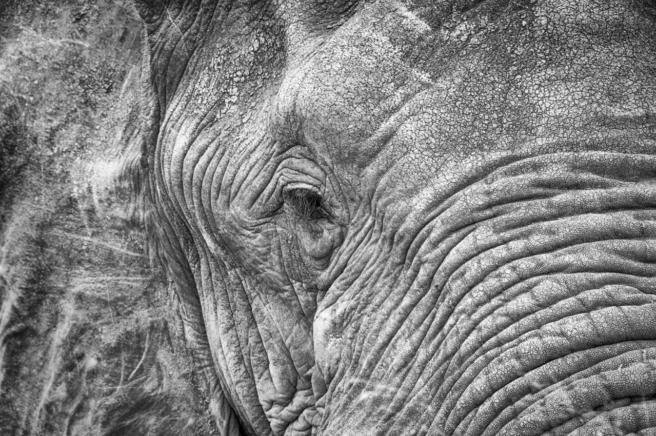 Eye of an elephant in Kruger National Park