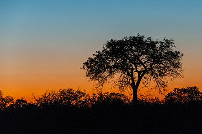 Sunset in Kruger National Park