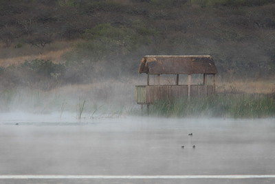 Hippopotamus hide in early morning, Tala Private Game Reserve