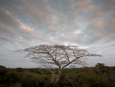 Sunrise, Tembe National Elephant Reserve