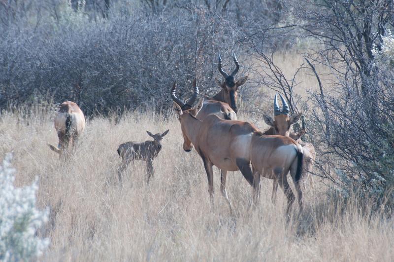Wildlife in Mattanu Private Game Reserve in South Africa