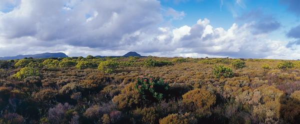 Cape Point fynbos