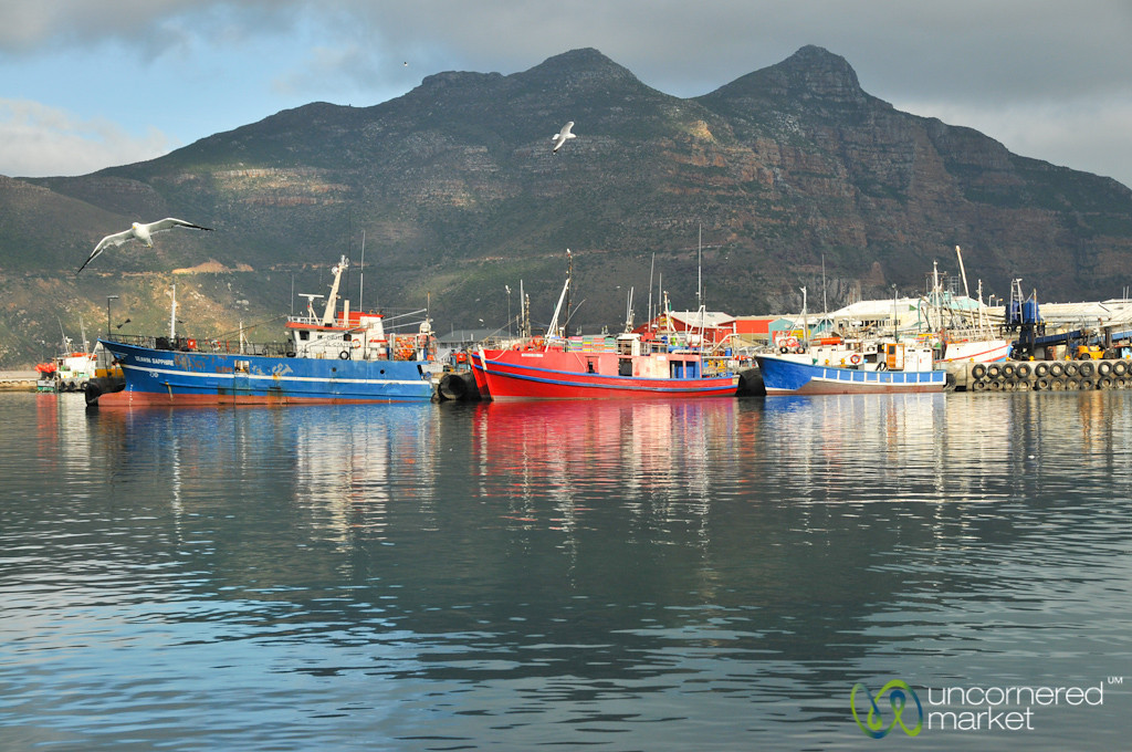 Colorful Boats at Hout Bay Harbor - Cape Town, New Zealand