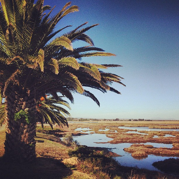 Palms and estuary, Bird Hide -- inland waters Western Cape #SouthAfrica