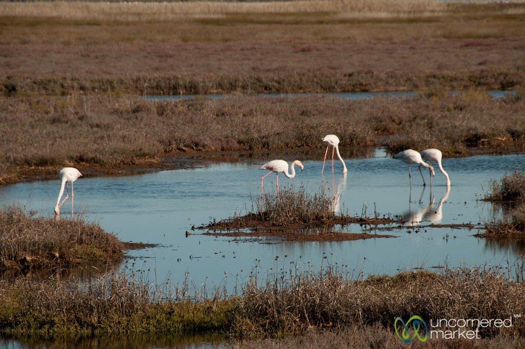 Flamingos at Port Owen - Western Cape, South Africa