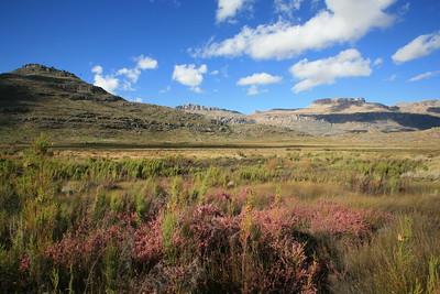 Fynbos near Tafelberg, Cederberg wilderness