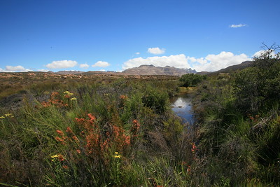 Riparian area in the Cederberg Wilderness