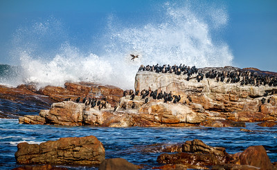 Wildlife at stunning Cape of Good Hope.