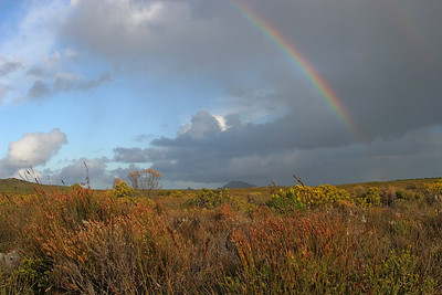 Cape Point fynbos with rainbow
