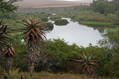 The Breede River near Swellendam.  Cape bitter aloe in foreground.