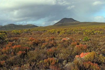 Typical coastal fynbos on Cape Peninsula