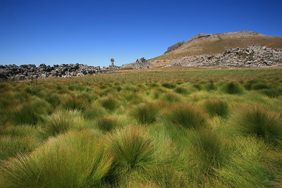 Cape reeds near Maltese Cross - Cederberg Wilderness.  Of the 318 species in the Cape reeds family, 294 are endemic to the Cape Floral Region
