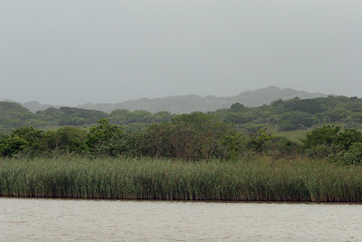 Lake St Lucia shoreline and forested sand dunes