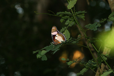 196 species of butterflies can be found in the park