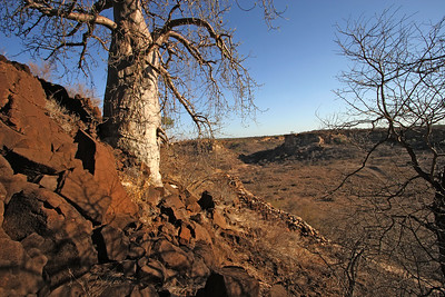 A baobab tree and an ancient stone wall above the K2 area
