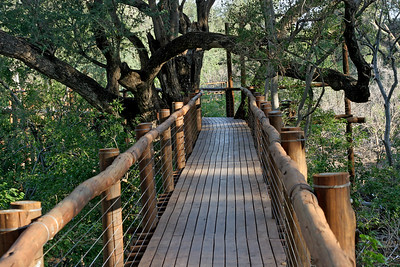 Treetop boardwalk, through the riparian forest on the banks of the Limpopo River
