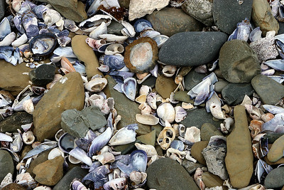 Shells found on the shores of the island.