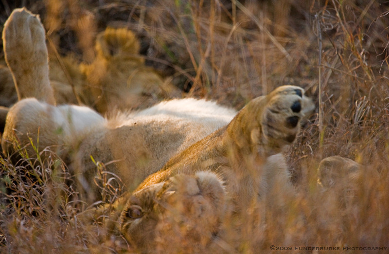 Lounging in the High Grass