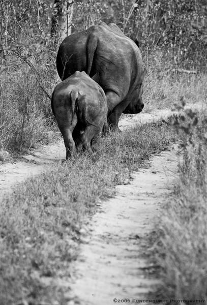 Departing Rhinos
