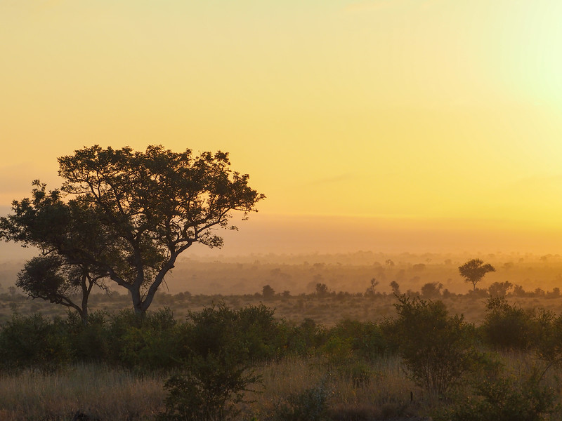 Sunrise in Kruger National Park