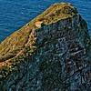Cape of Good Hope - Seascape