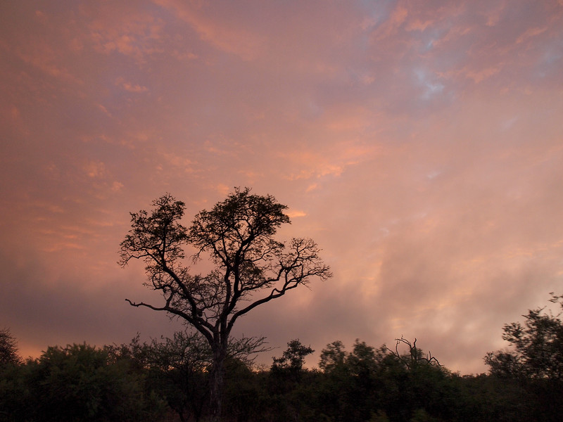 Sunrise at Kruger National Park, South Africa