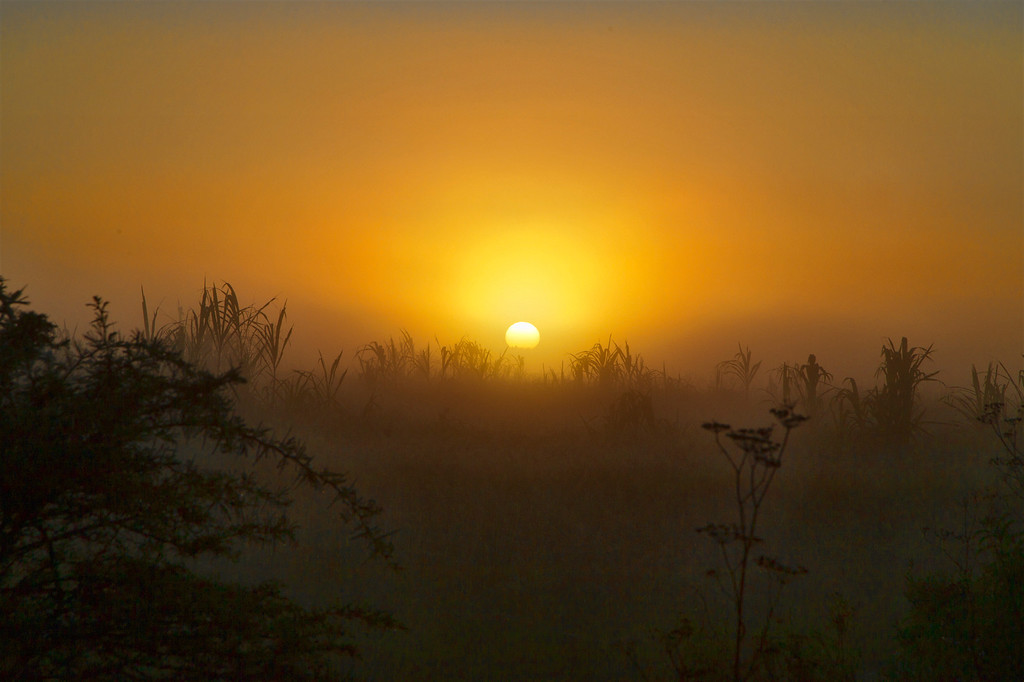 A thick mist obscures the rising sun as it illuminates a small hill near Addo, South Africa