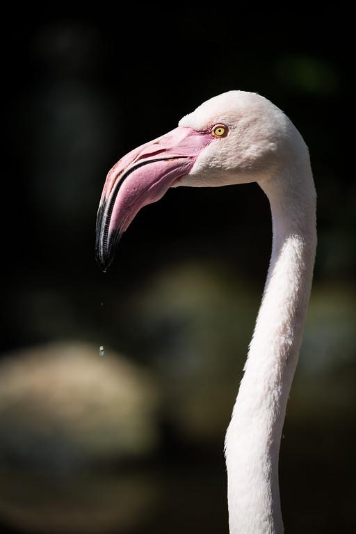 A Flamingo at Birds of Eden in Plettenberg Bay