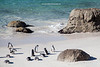 African penguins, Boulders Beach, Simon's Town, Cape Town, South Africa.