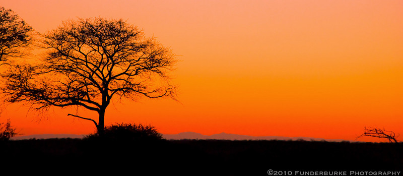 Safari Sunset