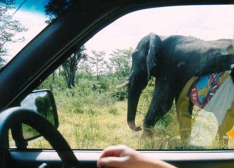 on the A3 up from Francistwon Botswana, this elephant made his appearance along the highway. 2002
