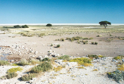 The Etosha Pan (on the horizon)