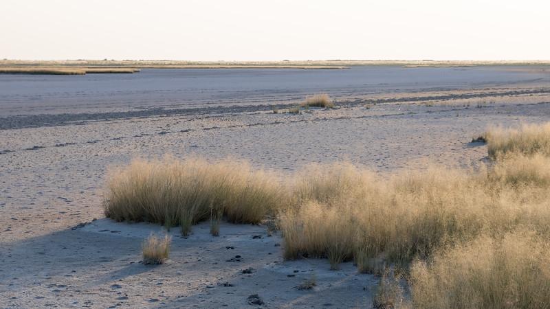 Tree Island, Magadikgadi