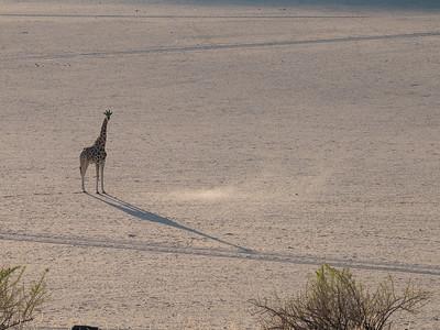 Girafe near Puros