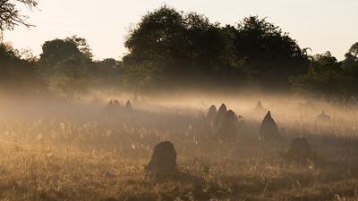 Sunrise over Termite mounds in Bangweulu wetlands