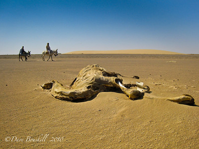 The Dead Camel Highway in central Sudan