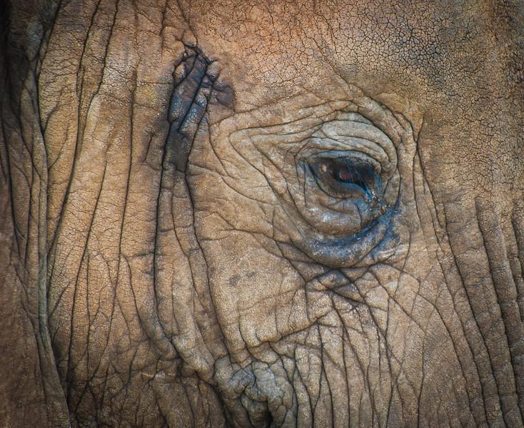 Elephant Eye, Tarangari Tanzania